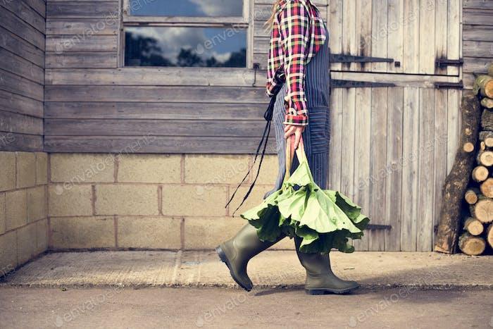 Культивированный садовник Урожай Концепция
