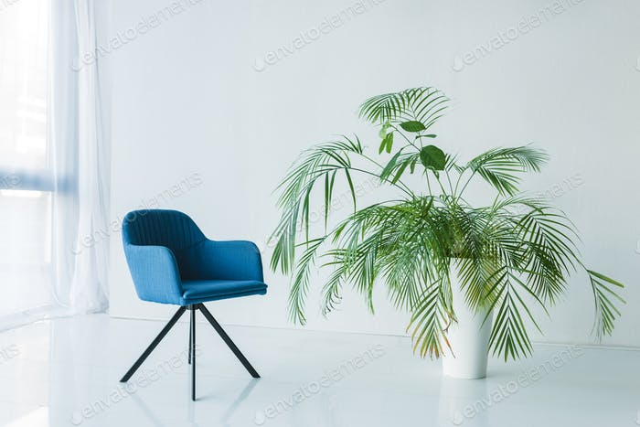 interior of living room with armchair and palm in pot