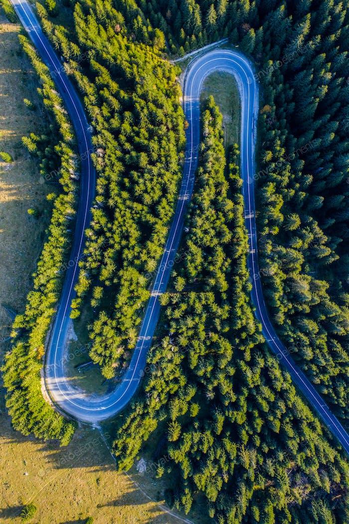 Luftaufnahme des grünen Kiefernwaldes und einer Landstraße, die von einer Drohne oberhalb gefangen genommen wurde