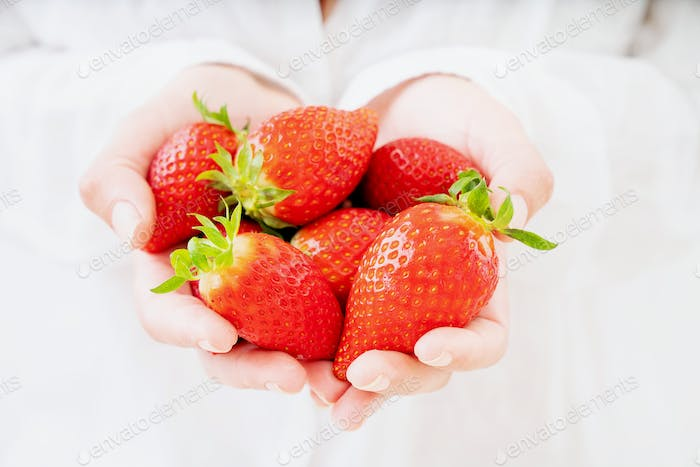 Fresh juicy strawberries in female hands