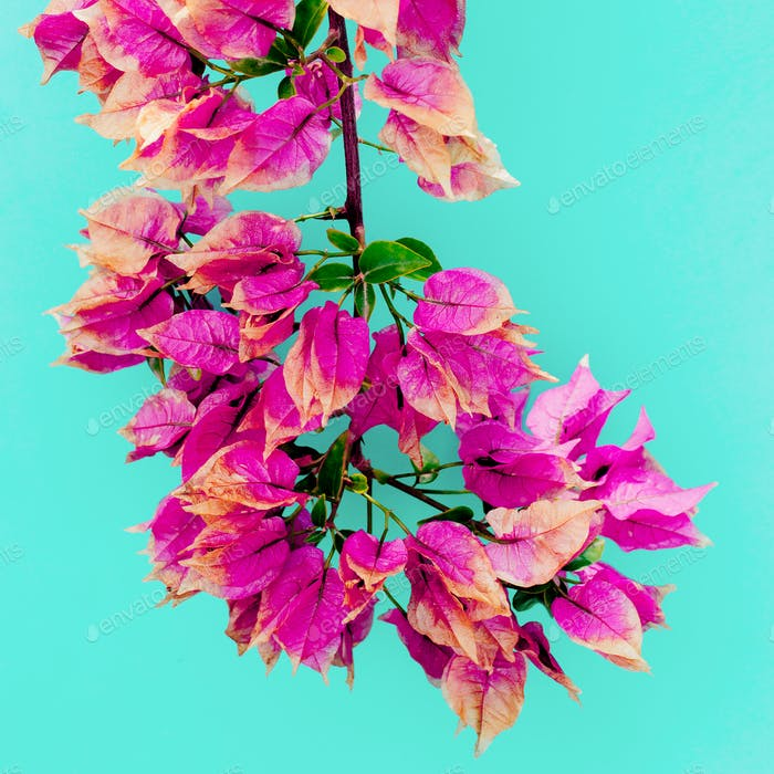 Tropical flowers. Minimal art design Fuchsia