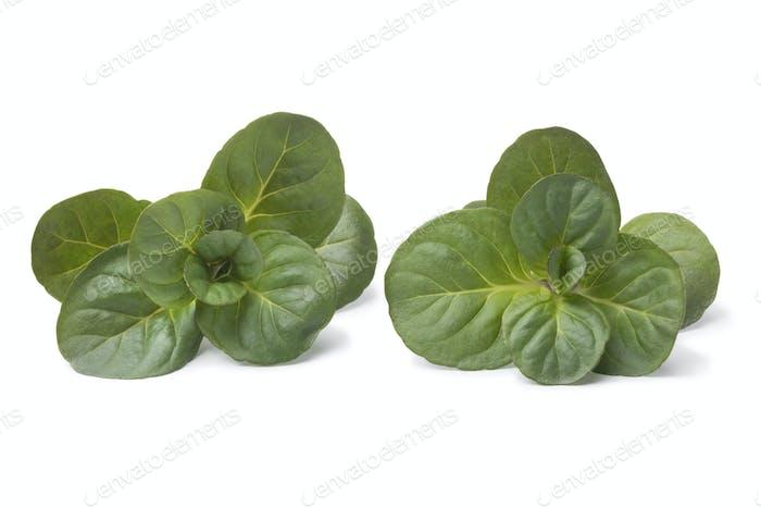 Fresh green Orange Mint twigs