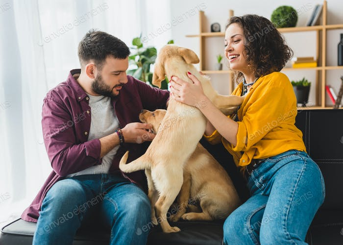 Smiling couple sitting on sofa with two playful labrador puppies