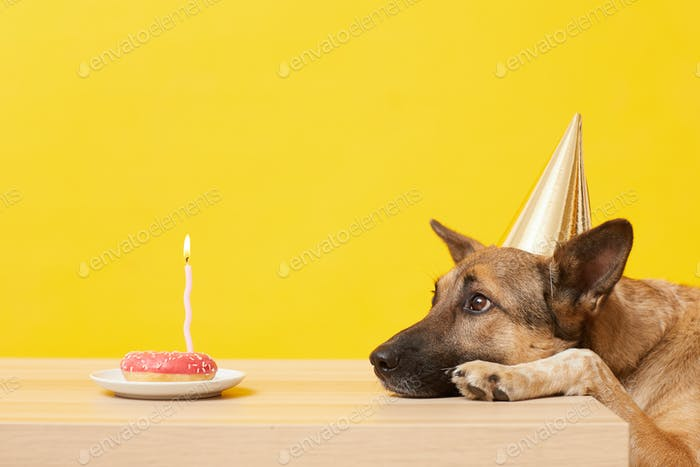 Dog has a birthday