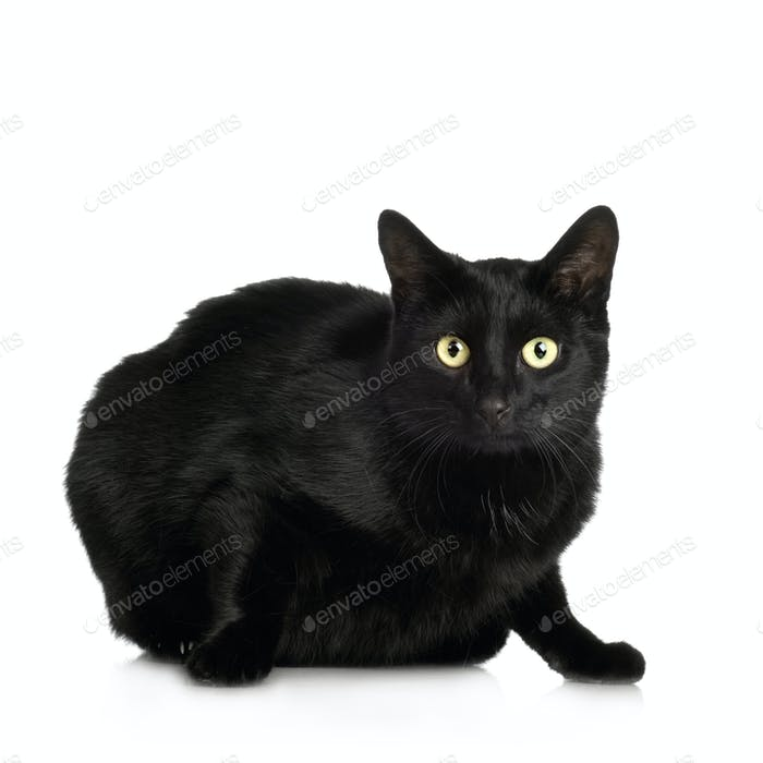 black Cat ( 4 years )