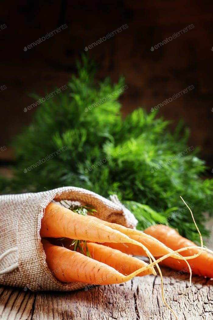 Ernte von Karotten