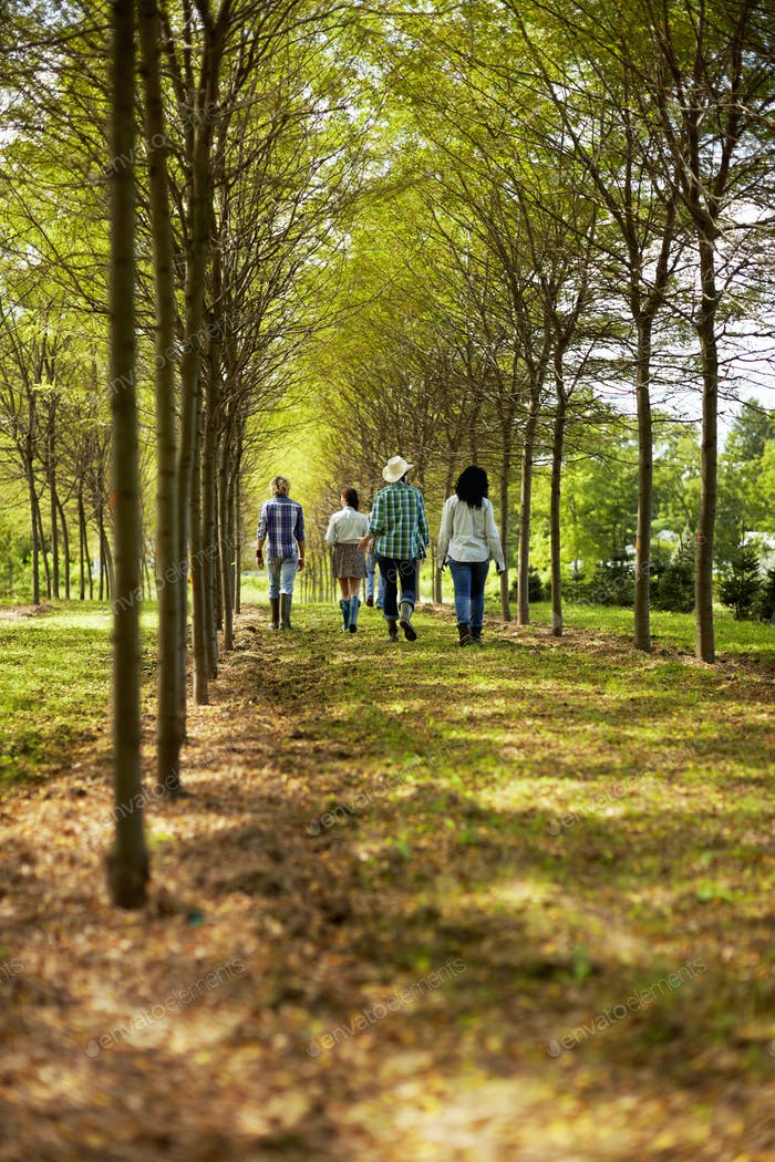 A group of friends walking down an avenue of trees in woodland.