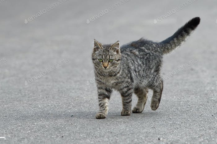 Portrait of shaggy cat on a asphalt road
