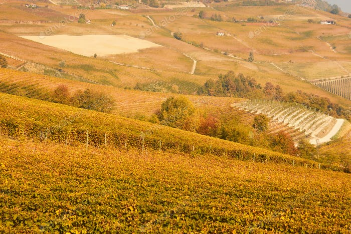 Vineyards and hills in autumn with yellow and brown leaves