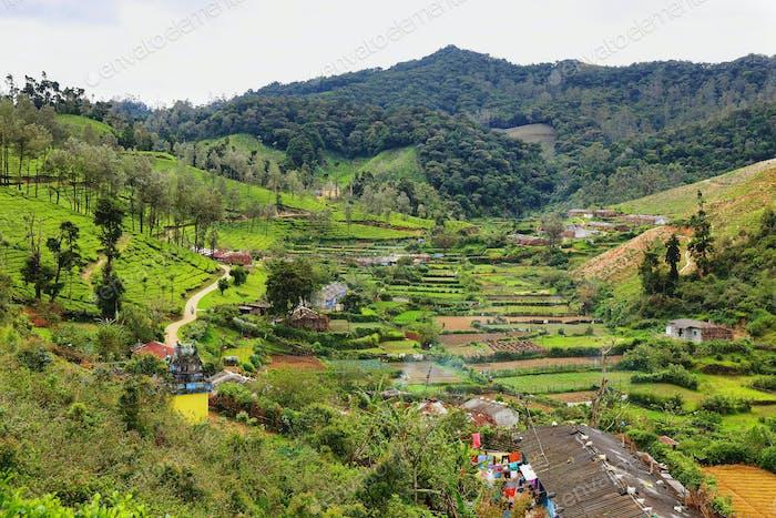 Tea plantations in Yellapatty village in Munnar, Kerala, India