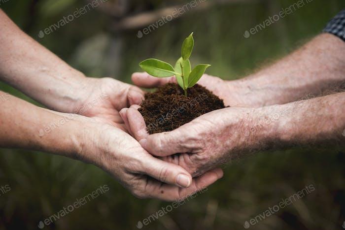 Umweltschutz Pflanzen Nachhaltigkeit