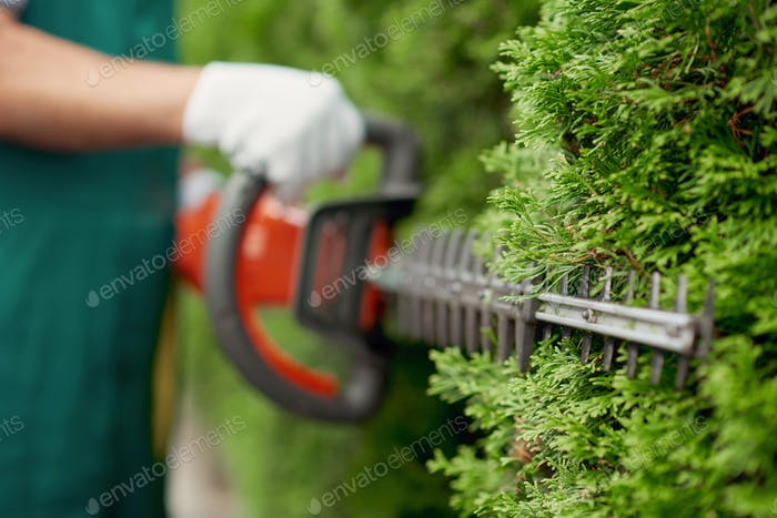 Male gargener trimming hedge using special tool