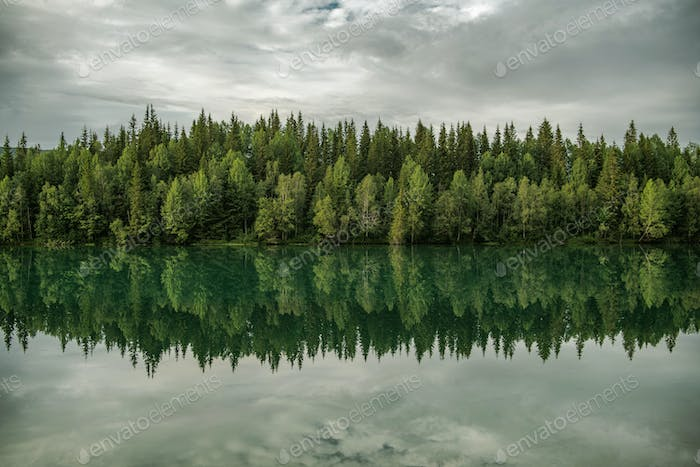 Lake and Forest Line Scenic Nature
