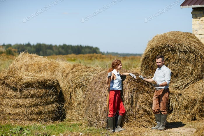 Hay of good quality