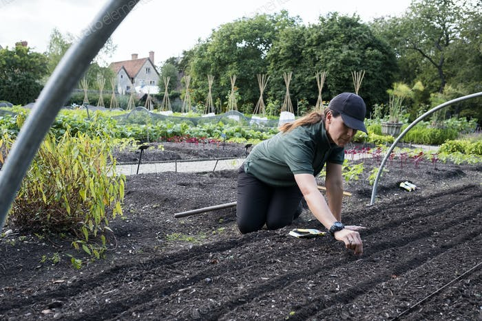 Woman kneeling in a vegetable bed, sowing seeds.