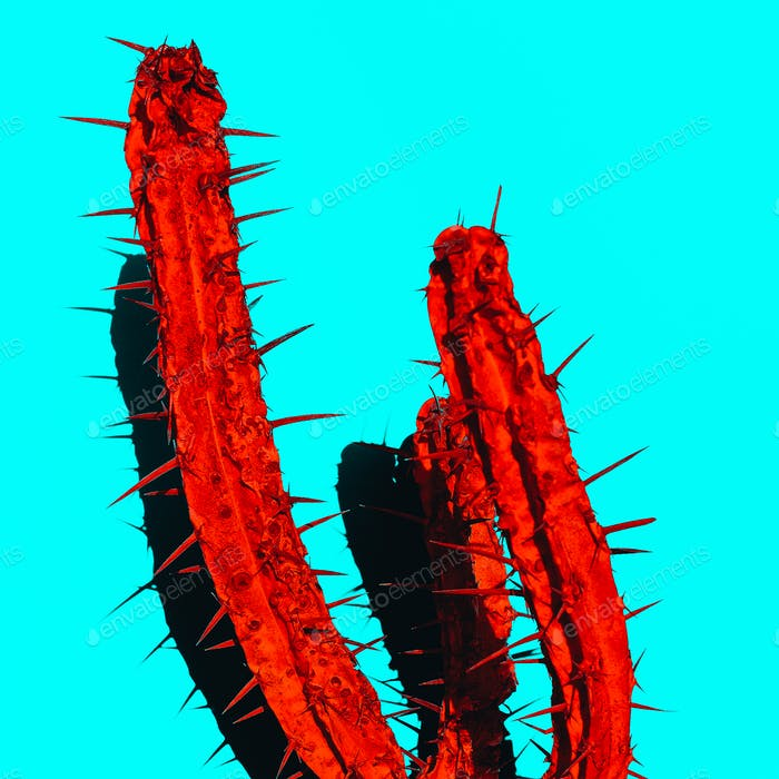 Red Cactus with shadow. Creative design. Minimal art gallery