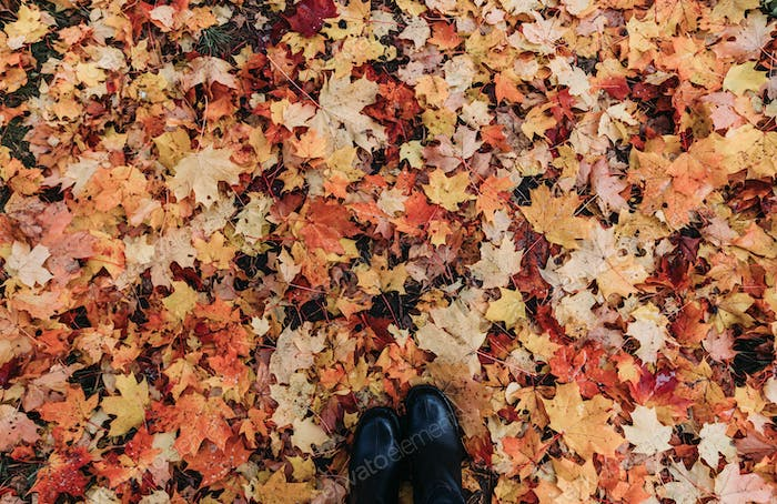 Top view of the fallen maple leaves on the ground and boots. Autumn orange background.