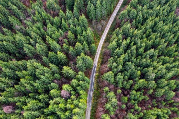 Spectacular aerial drone view of forest road captured from above