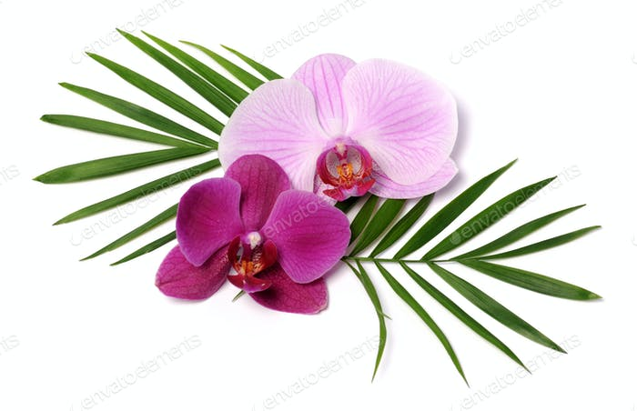 hermosas orquídeas