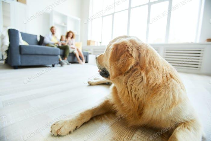 Restful dog