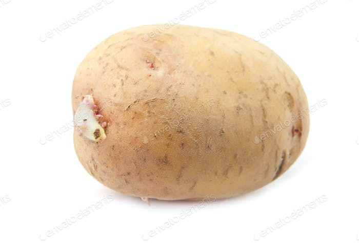 potato is isolated
