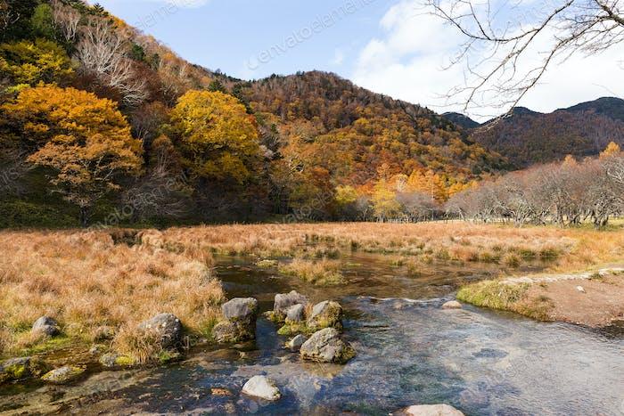 Marsh in nikko of Japan