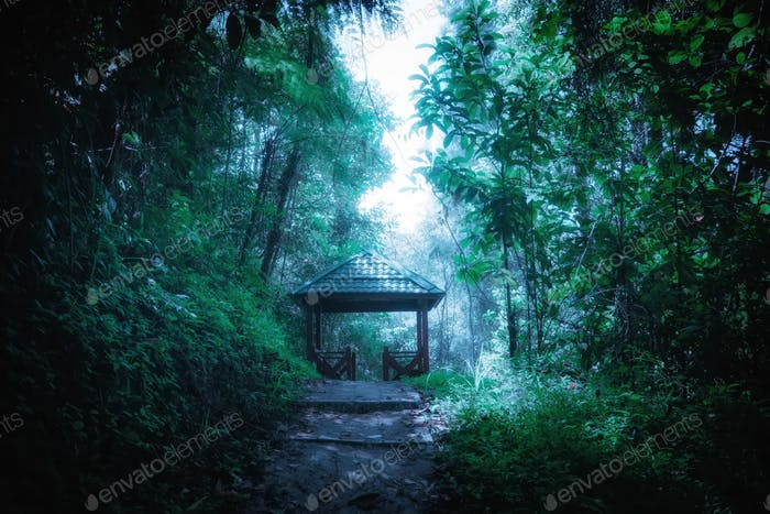 Mysterious foggy forest with wooden bridge and pavilion