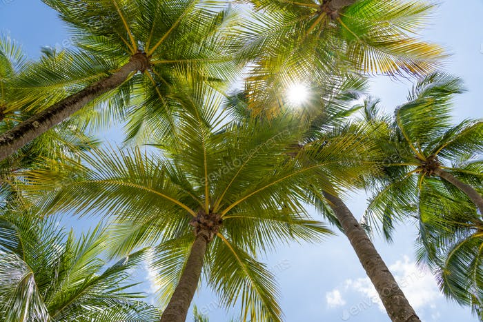 Coconut trees at the beach