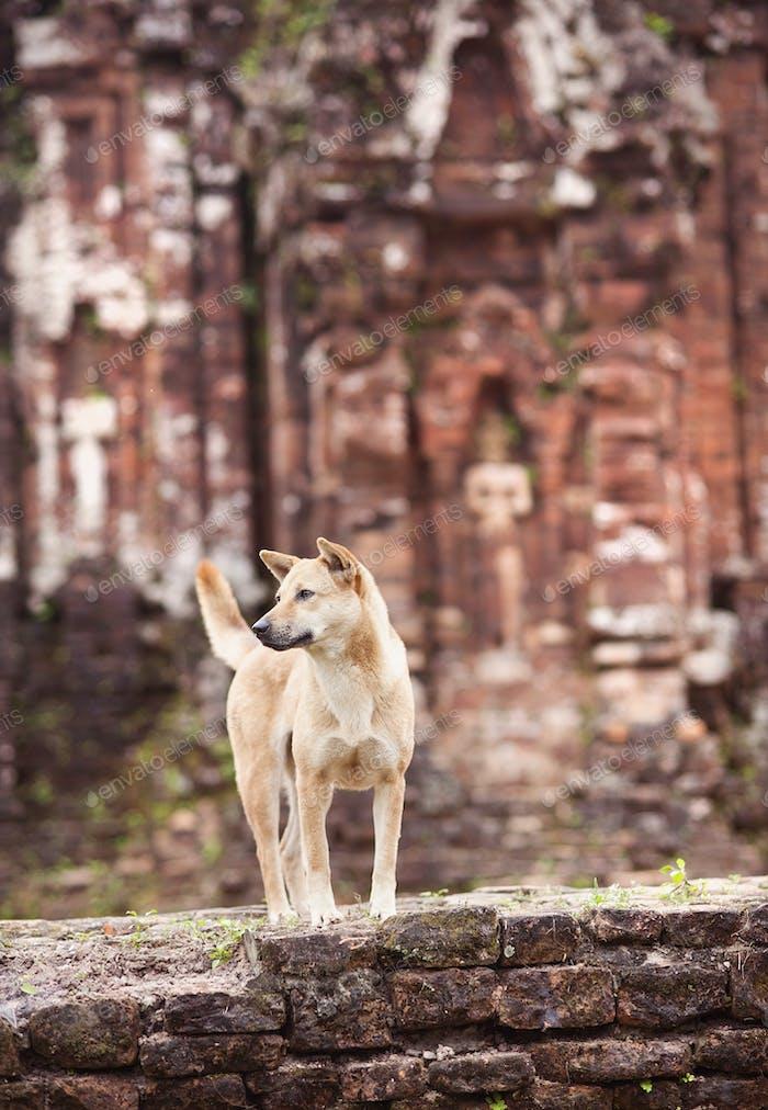Hund außerhalb des Tempels