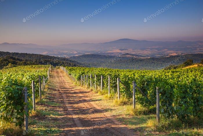 Chianti Vineyard Tuscany, Italy