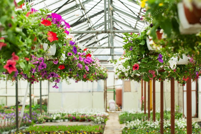 Flowers in the greenhouse