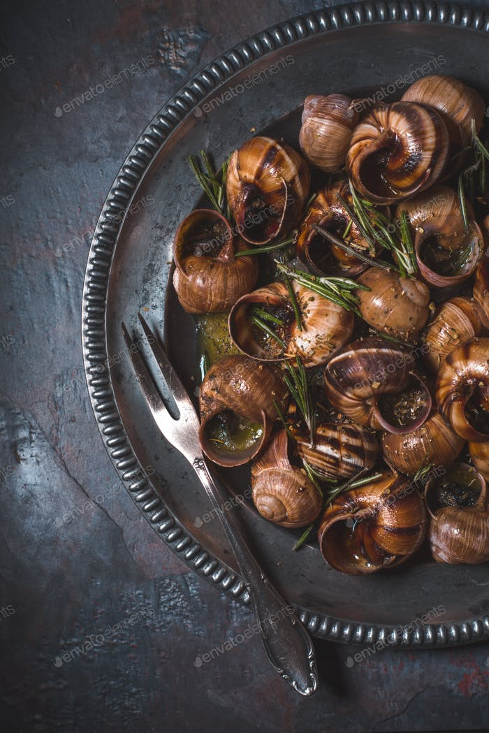 Burgundy snails with rosemary on the background