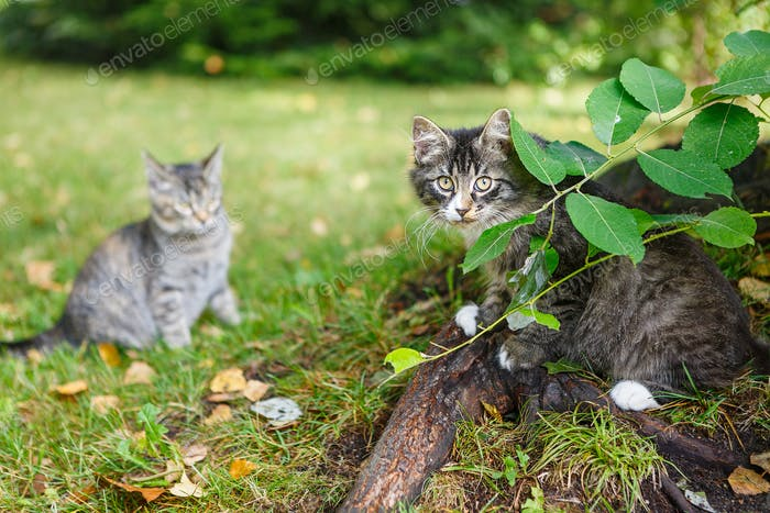 Zwei schöne obdachlose graue Kätzchen