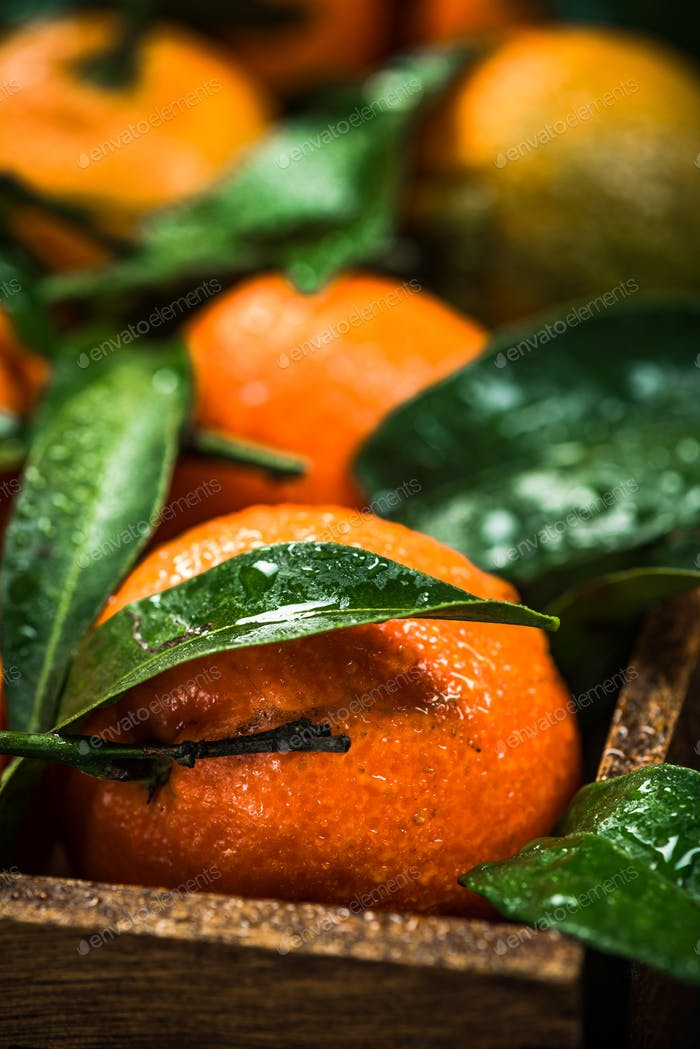Tangerines or clementines, close up view