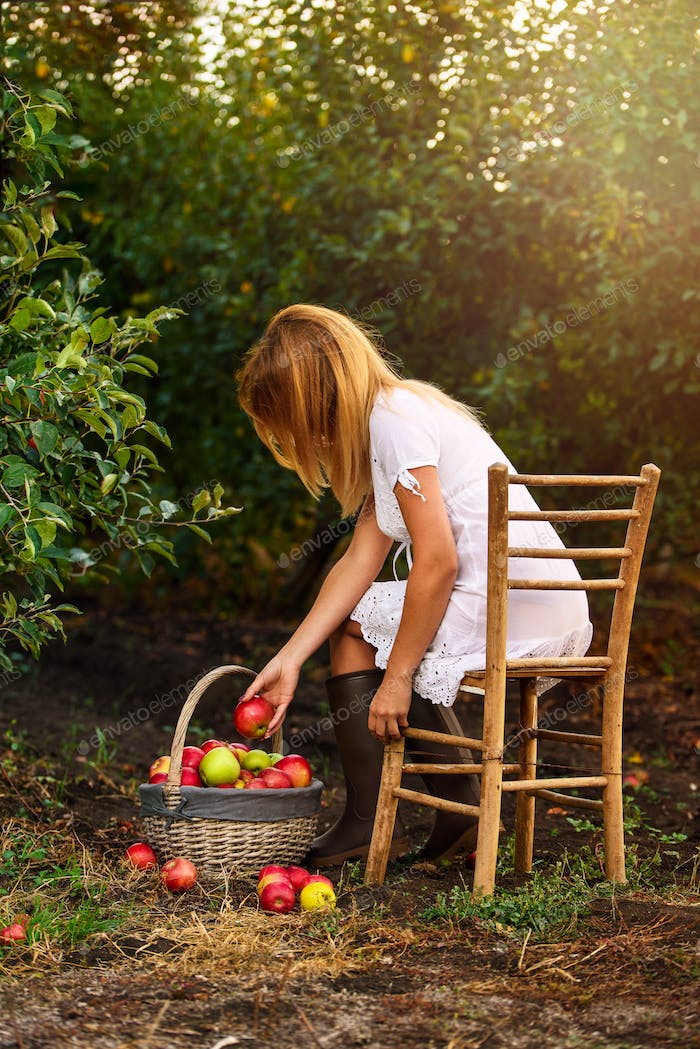 A girl with white dress in apple garden pick apples in basket