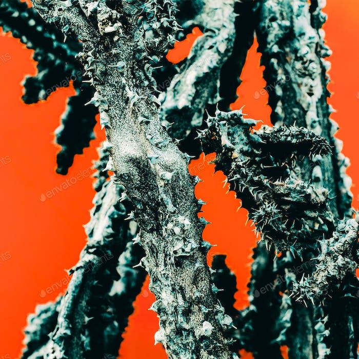 Cactus. Dead. Minimal art details