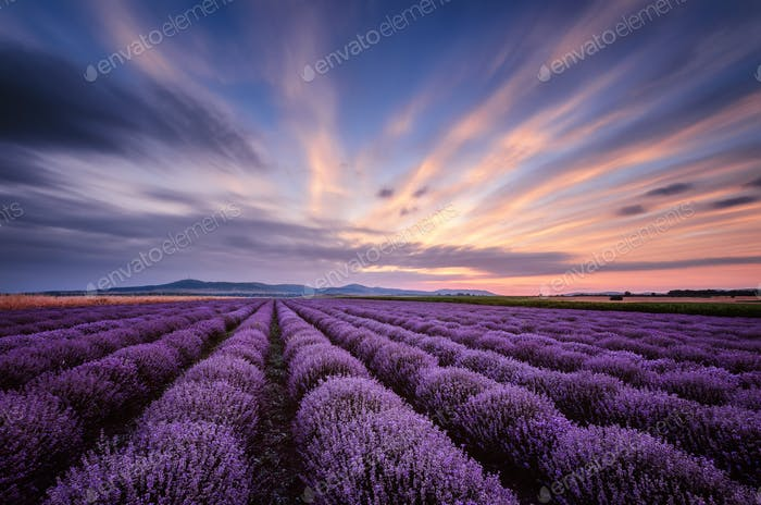 Before sunrise in lavender field (Bulgaria)