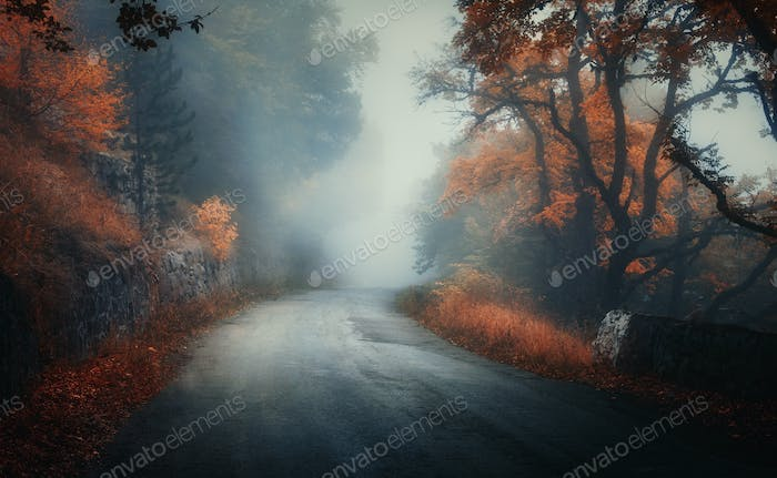 Dark autumn forest with rural road in fog at dusk