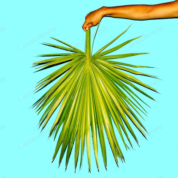 Minimal. Hand holds a palm leaf. Summer trend
