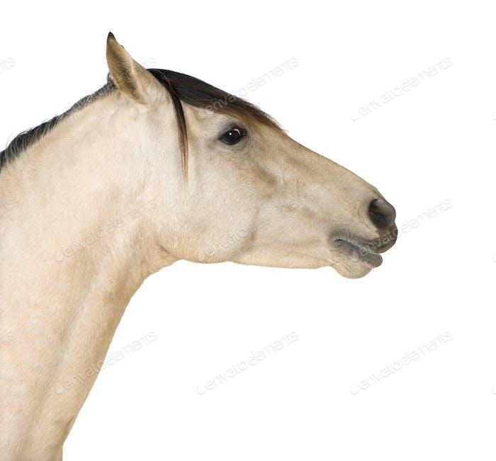 Nahaufnahme auf einem Pferd