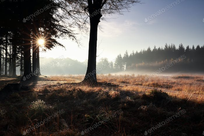 serene misty sunrise in forest