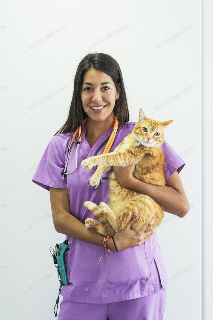Cheerful women veterinary holding a yellow cat.