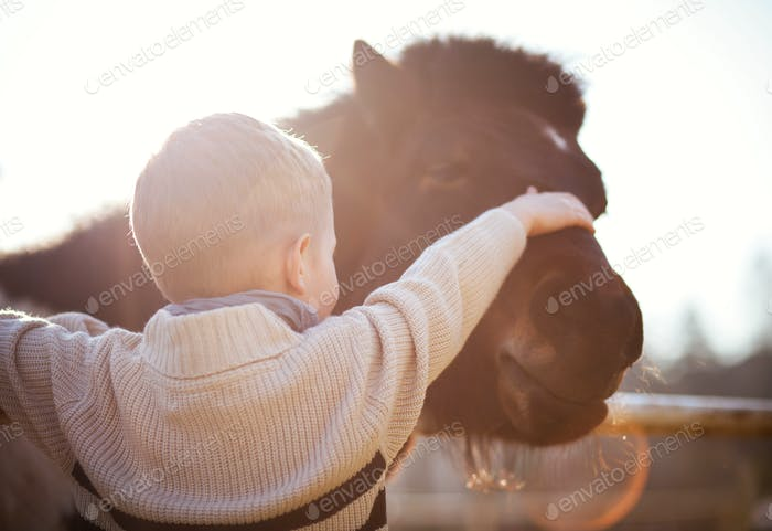 Child stroking pony, love and affection