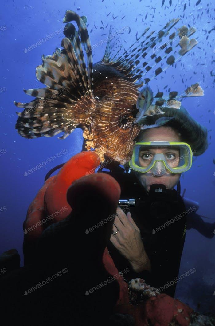 Scuba diver approaches a Red lion fish.