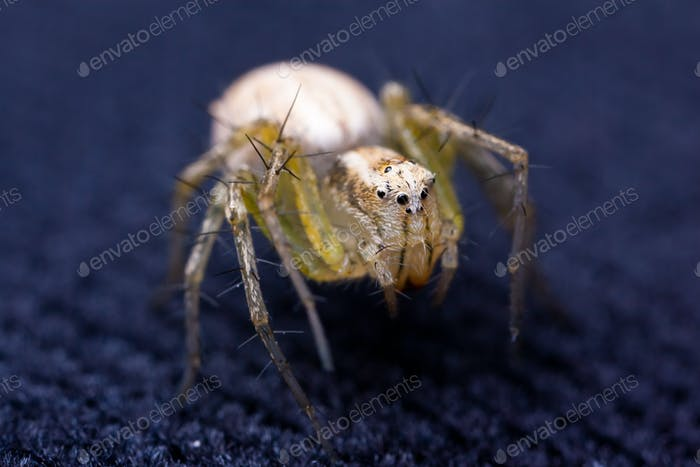 Tiny spider on velvet