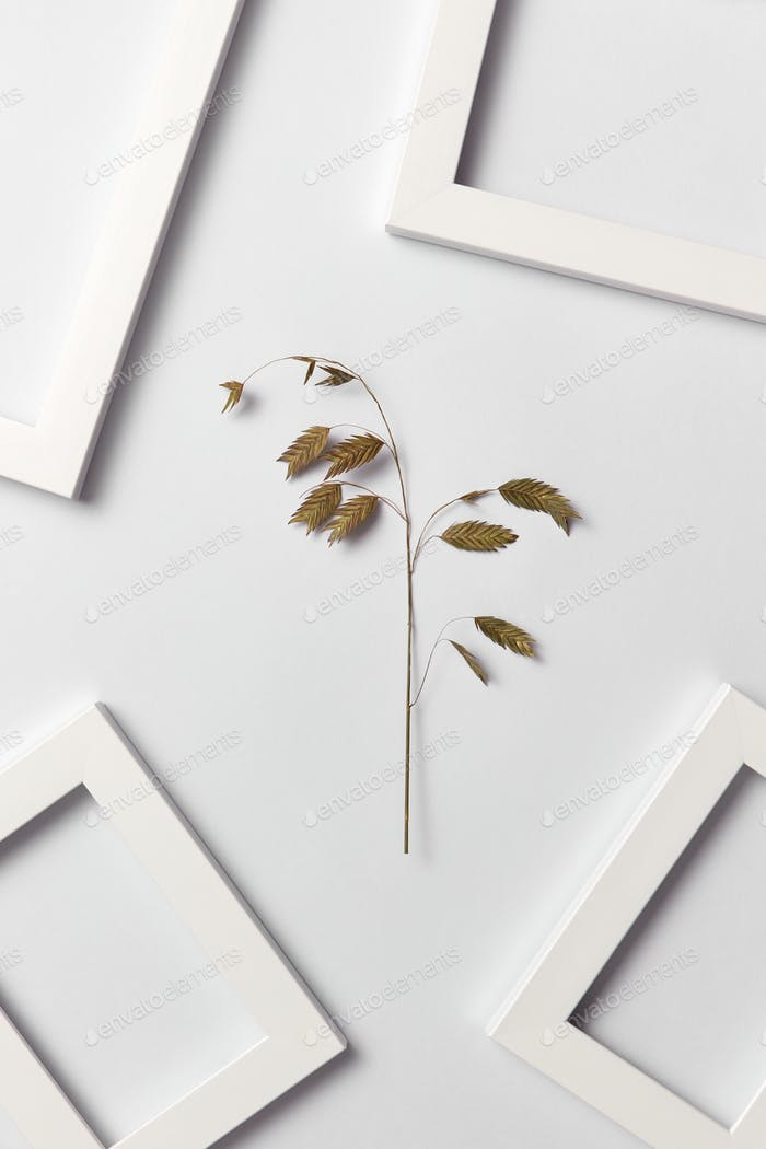 Decorative composition with natural plant and empty frames on a light background