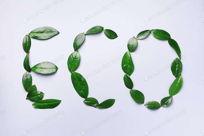 Wort Eco aus grünen Blättern auf grauem Hintergrund. Draufsicht. Flache Lag. Ökologie, umweltfreundlicher Planet