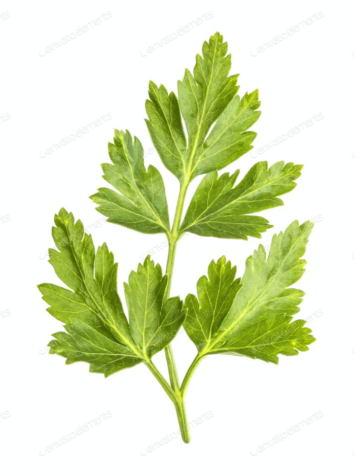 Parsley leaves isolated on white background. Close-up