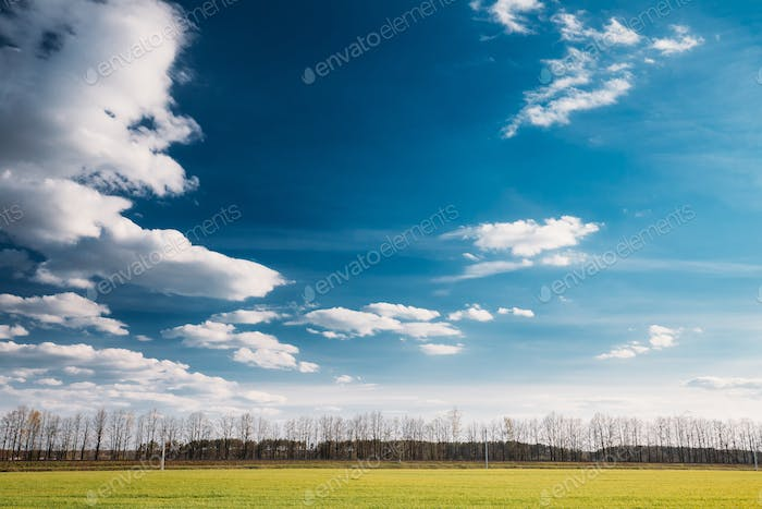 Green Field In Sunny Spring Day. Agricultural Rural Landscape