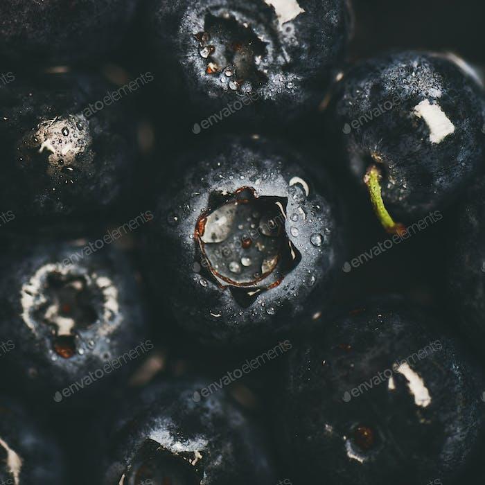 Flat-Lay von nassen dunklen Waldbeeren, Draufsicht, quadratische Ernte